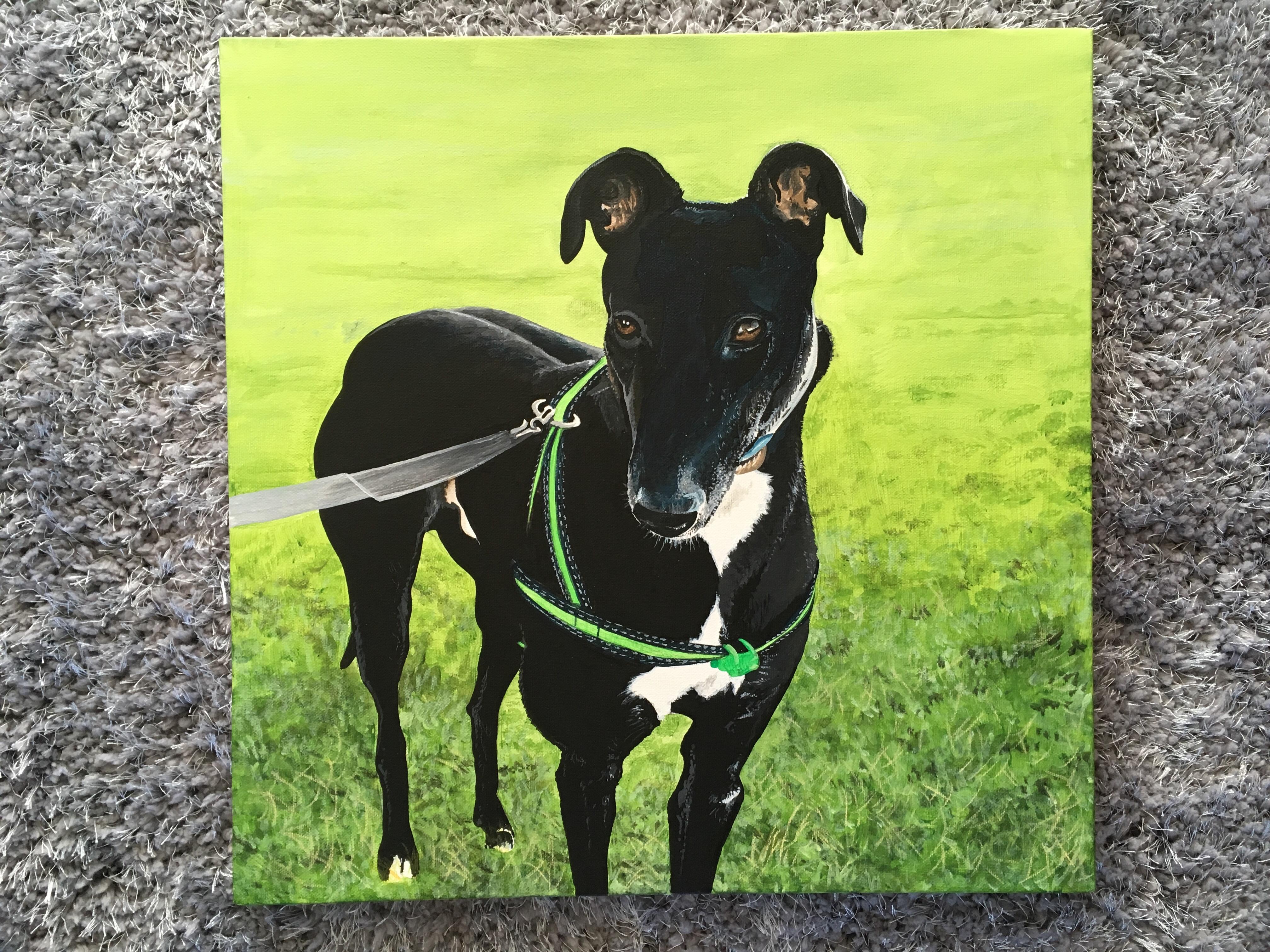 Greyhound 50 x 50 Acrylic on canvas
